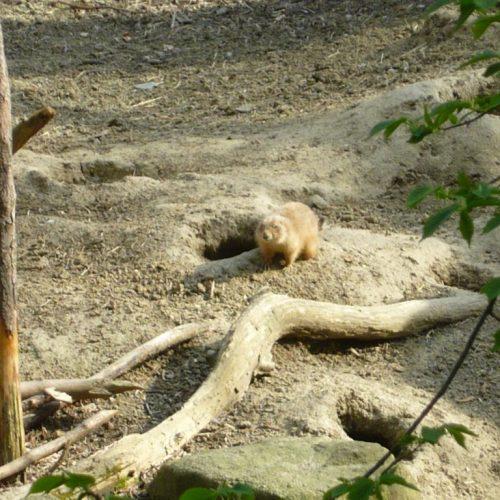 penzion-via-ferrata-zoo-decin-3